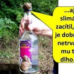 snmka31